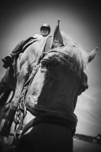 häst närbild