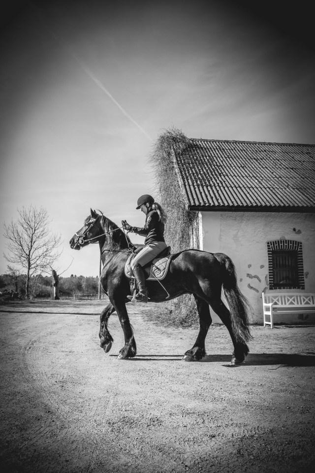 Fotografering häst med ryttare i svart vitt