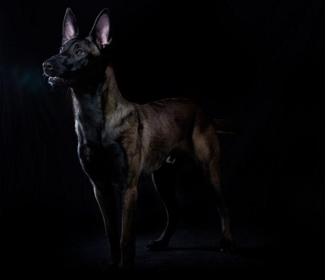hundfotograf halmstad