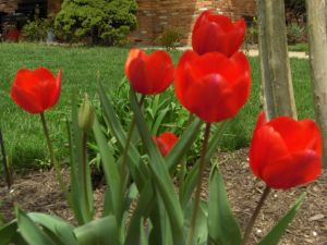 Easter Blooms 1