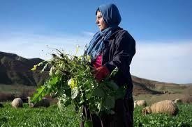 Iraq agriculture -maginternational.org
