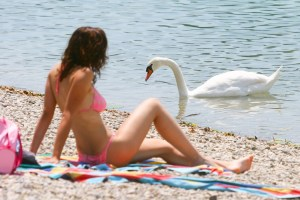 A young woman sunbathing on a pebble lake shore next to a swan swimming in the shoal.