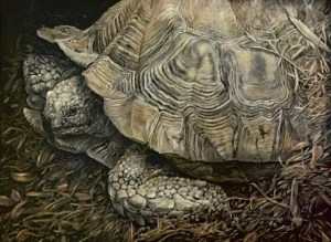 Turtle of Chestatee Katherine Moore, 2nd Place Student Award