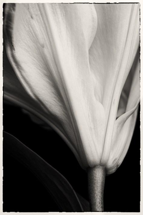 Catherine J Alston Grace Lily
