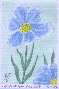 609 HIMALAYAN BLUE POPPY