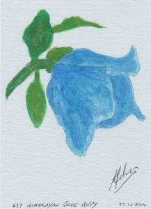 637 HIMALAYAN BLUE POPPY