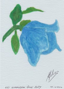 637 HIMALAYAN BLUE POPPY