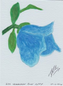 639 HIMALAYAN BLUE POPPY