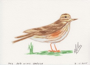 733 RED WING THRUSH