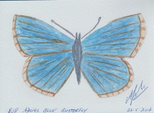 808 ADONIS BLUE BUTTERFLY