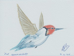 828 HUMMINGBIRD