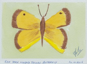 834 DARK CLOUDED YELLOW BUTTERFLY