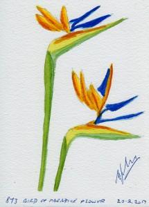 873 BIRD OF PARADICE FLOWER