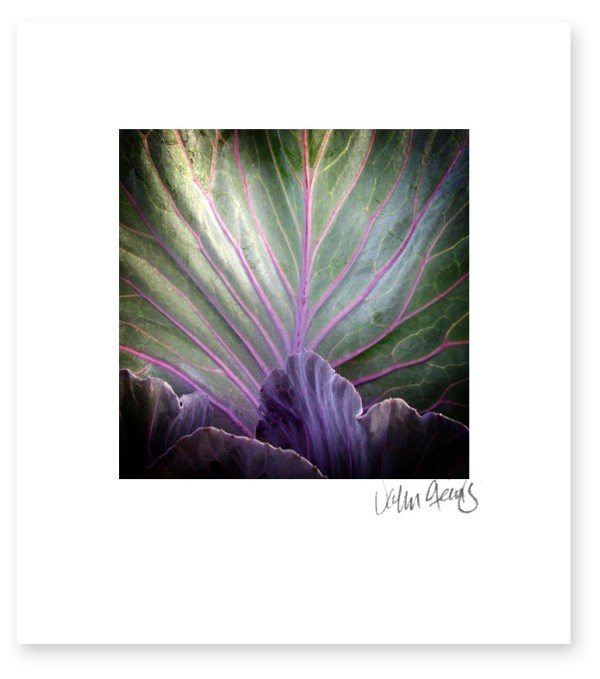 An art photo showing a purple veined leaf