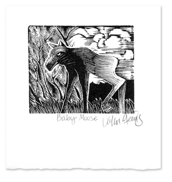Baby Moose ~ Wood engraving ~ John Steins
