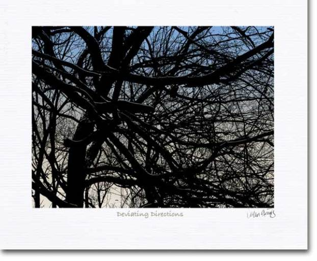 deviating directions shows the intricate inter lacing of tree branches and twigs in silhouette.
