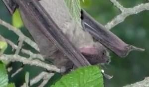 Bat at Bracken Cave   John Tedesco