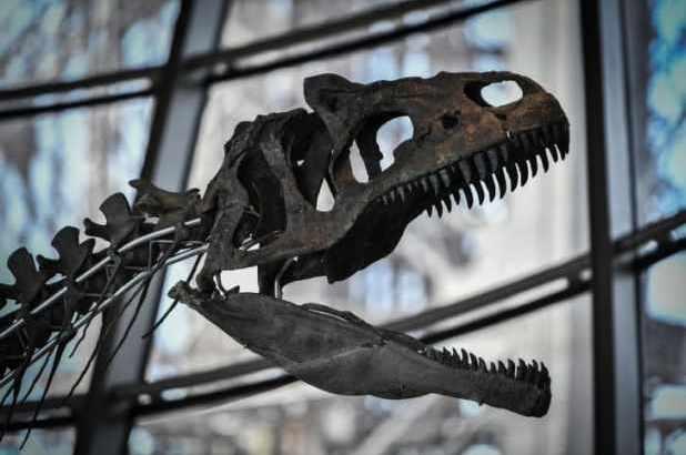هيكل-ديناصور