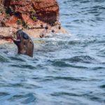 Dia 04.  Paracas: a National Geographic ao vivo e a cores
