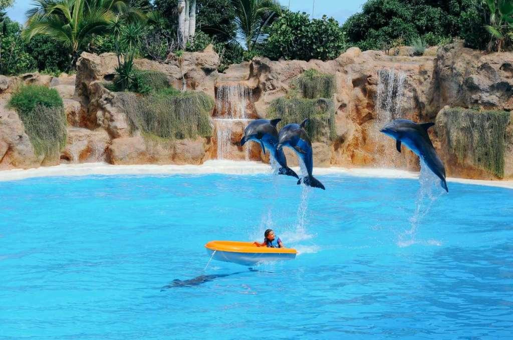 turismo responsável - golfinhos