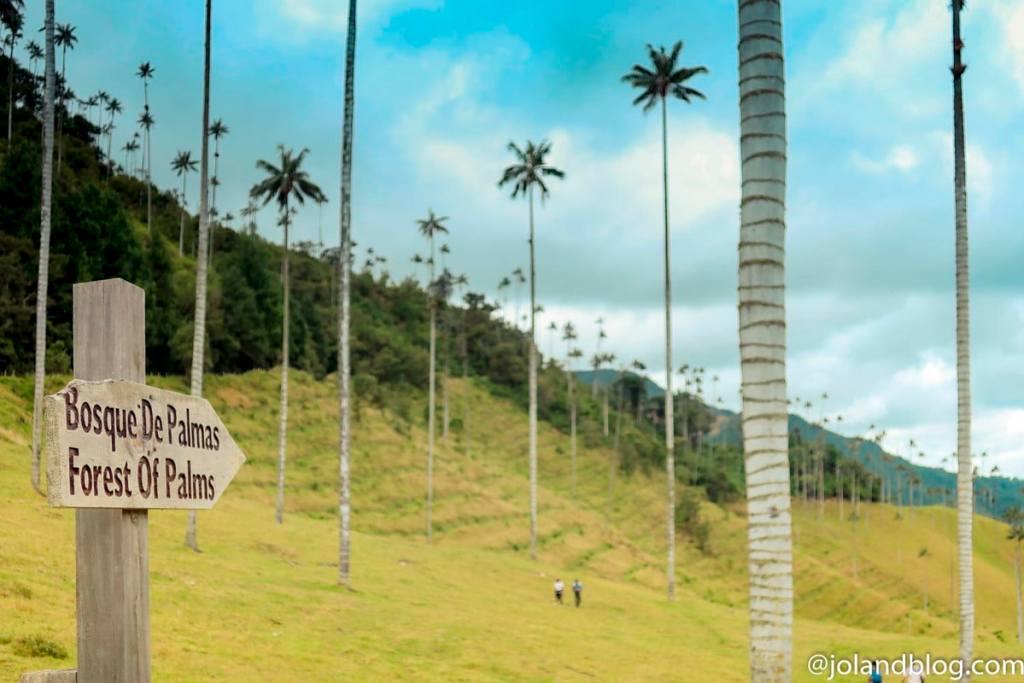 Vista sobre o Bosque de Palmas no Valle de Cocora, na Colômbia