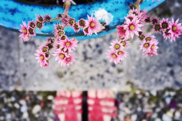 cute-pink-flowers