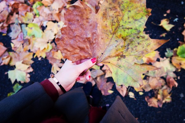 huge-autumn-leaf