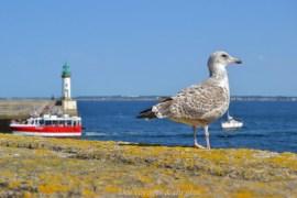 50 experiences a vivre en Bretagne
