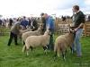 wensleydaleshow2011-11