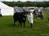 wensleydaleshow2011-4