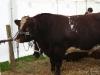 wensleydaleshow2011-8