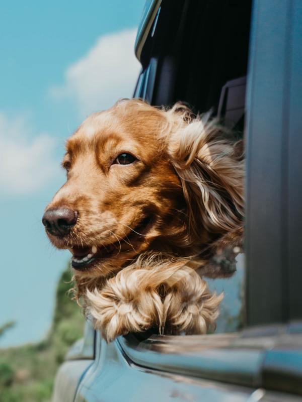 สุนัข อารมณ์ดี มีความสุข