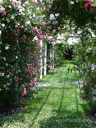 Looking away from the house, down the arbor.