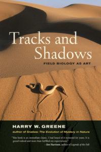 tracks-and-shadows