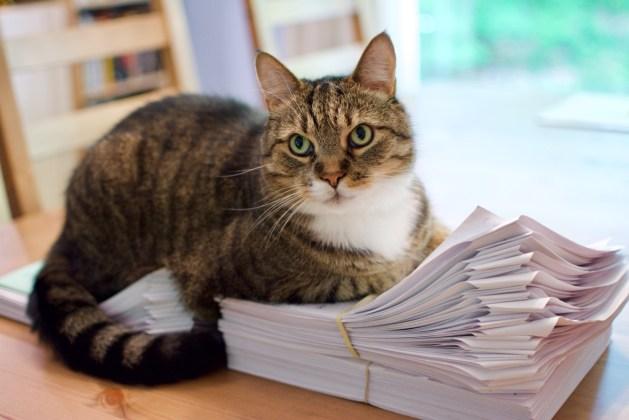 Doofus helps with marking.