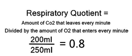 respiratory quotient1_opt