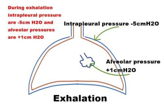 Mechanical Ventilation Physiologic Effects Of Mechanical