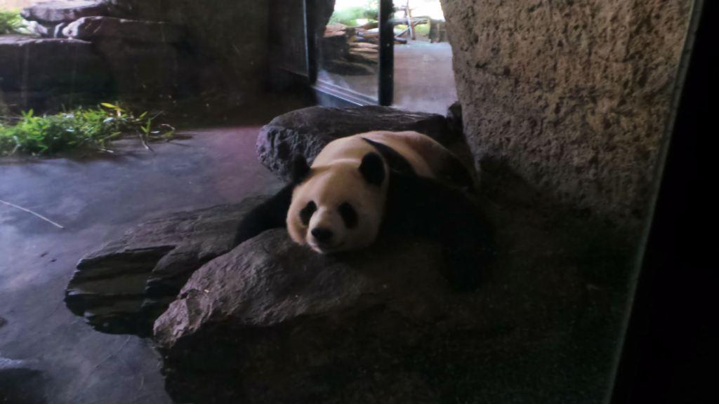 Pairi Daiza Panda Geant