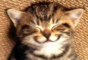 How to be happy optimisst