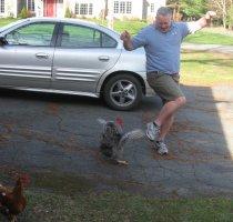 chicken attacks
