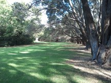 Auckland Domain. This was a very lovely park.