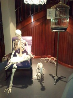 What museum skeleton exhibit would be complete without one of a human, in his native habitat? :) (Australian Museum)