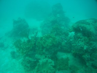 A particularly photoworthy coral/fish seascape at the Great Barrier Reef.