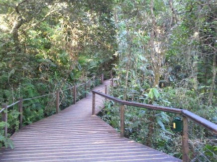 The second Skyrail stop was Red Peak Station, which had a boardwalk through the rainforest.