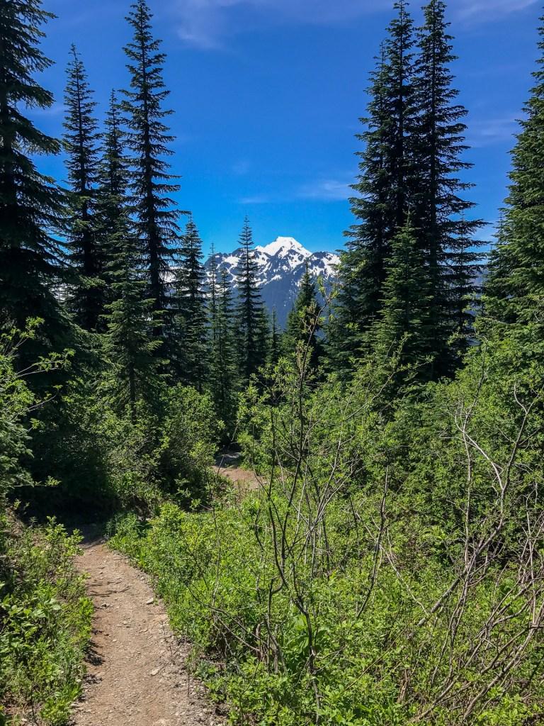 Mount Baker behind trees