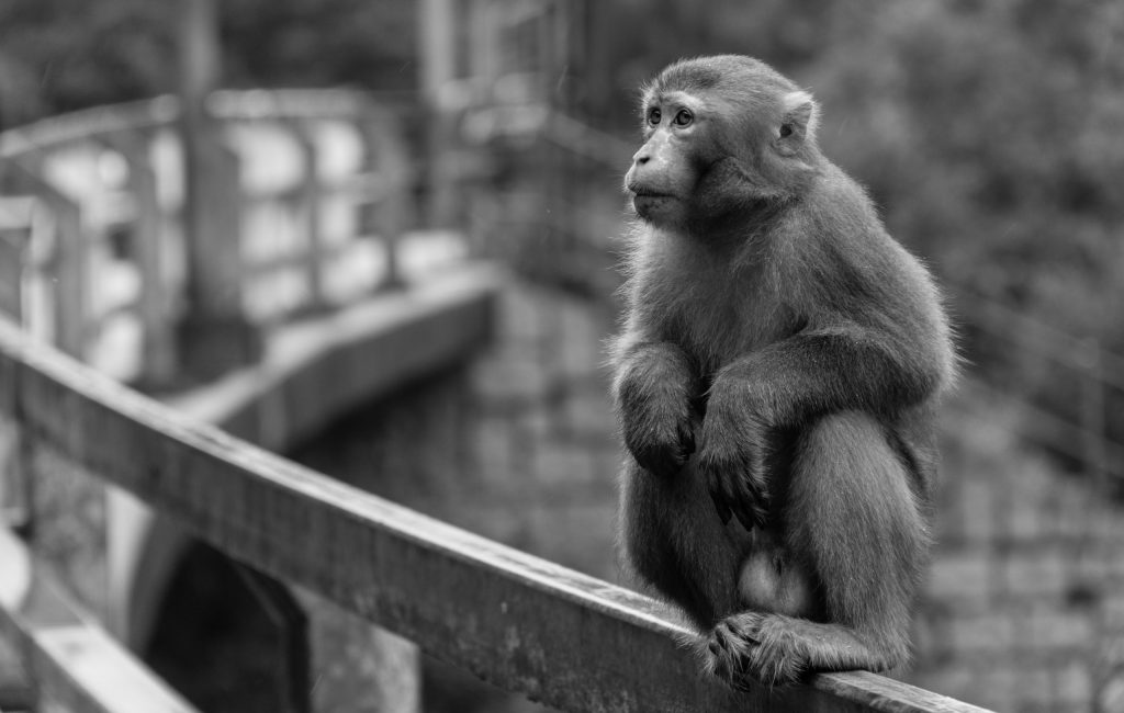 Monkeys sony a6000 + 18-105mm f/4