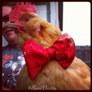 Chicken in bow tie pasta - NOT