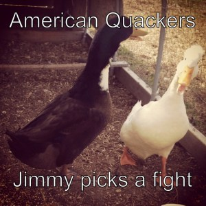 This week on American Quackers, Jimmy picks a fight