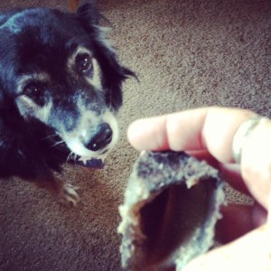 Dog looks at hoof