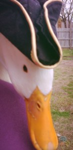 Hat on a duck